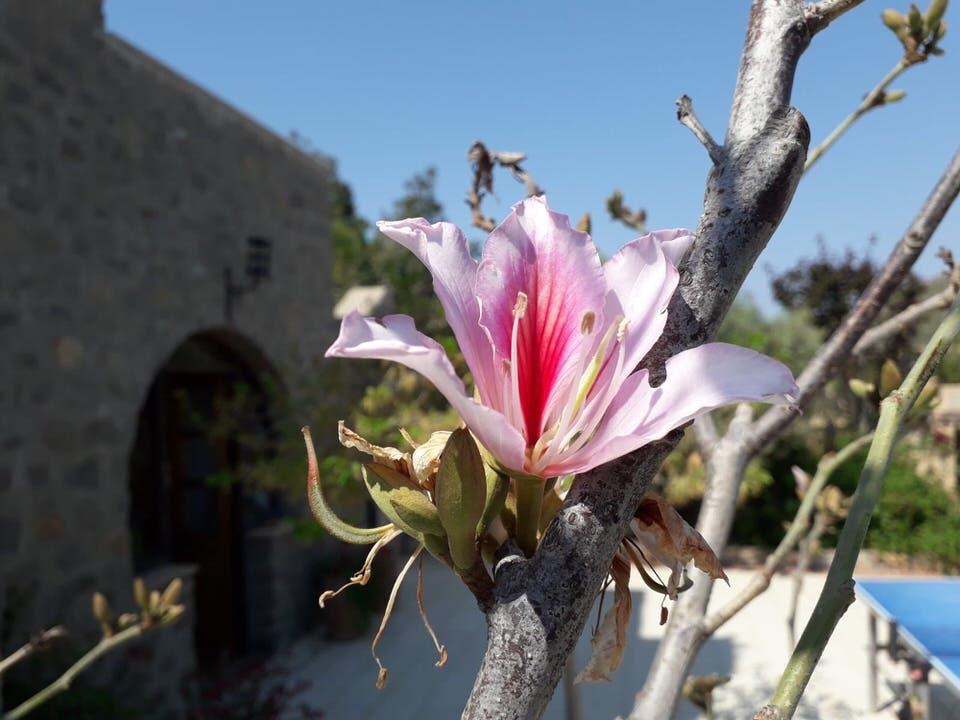 Blue Vista Patmos