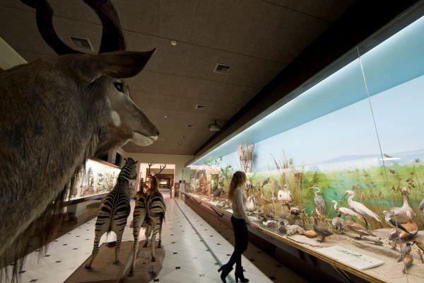 Μια μικρή γεύση πριν την επίσκεψή σας στο Μουσείο Γουλανδρή Φυσικής Ιστορίας (video)