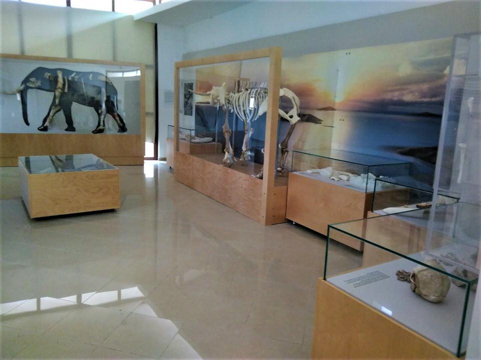 Το Μουσείο Ελεφάντων στην Τήλο