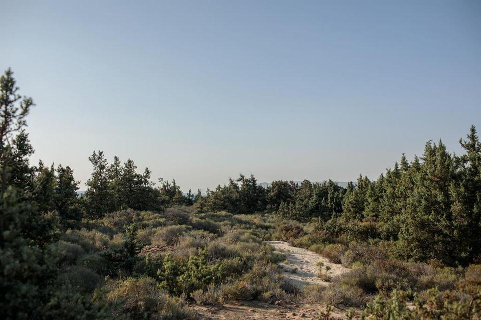 Cedar Forest Alyko: Luxury διαμονή στο μοναδικό κεδρόδασος της Νάξου