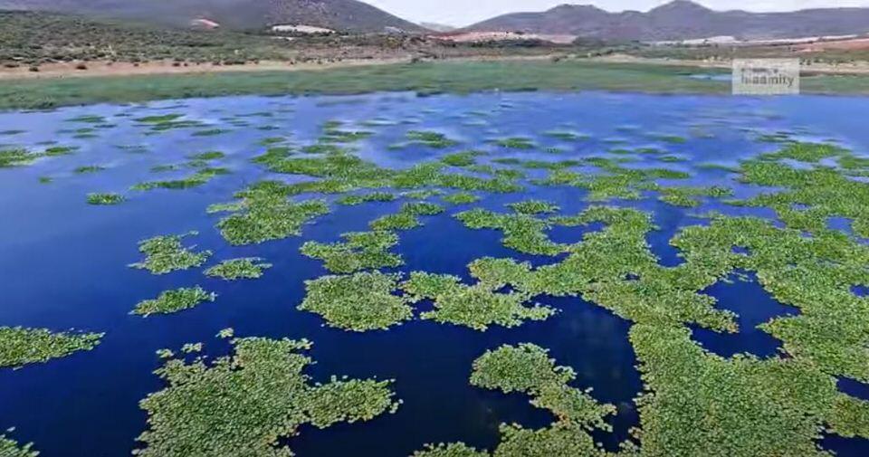 Παραλίμνη Βοιωτίας: Ταξίδι στο δάσος με τα νούφαρα