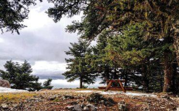 Εθνικός Δρυμός του Αίνου: Εδώ βρίσκεται το έλατο που είναι το μοναδικό στο είδος του σε όλον τον κόσμο!