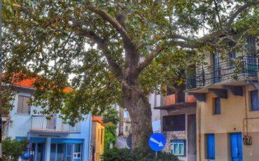 Λογκανίκος: Ταξίδι στο ορεινό χωριό του Ταΰγετου