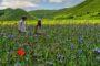 Castelluccio: Ταξίδι στο πολύχρωμο μεσαιωνικό χωριό της Ιταλίας με τα χιλιάδες λουλούδια!