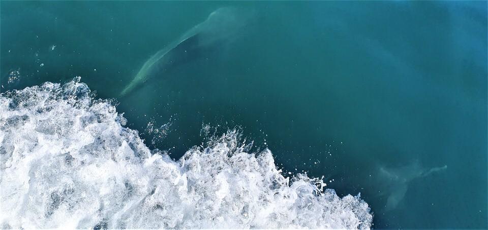 Ημερήσια κρουαζιέρα στον Αμβρακικό παρέα με τα δελφίνια! (video)